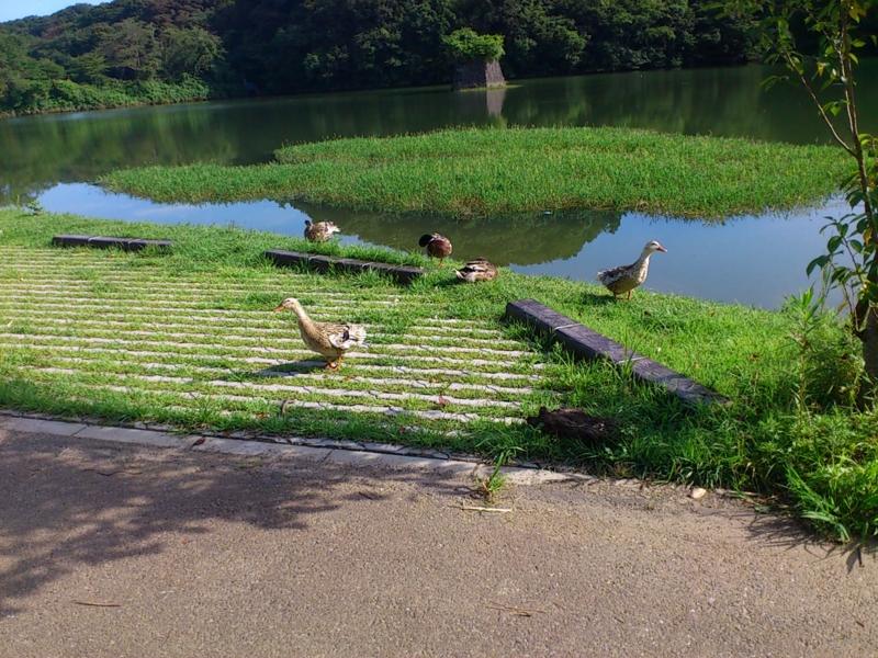 f:id:puchitenshi:20120719082717j:image