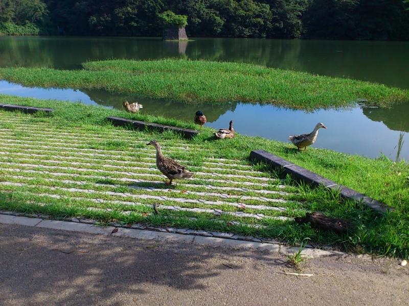 f:id:puchitenshi:20120719082723j:image