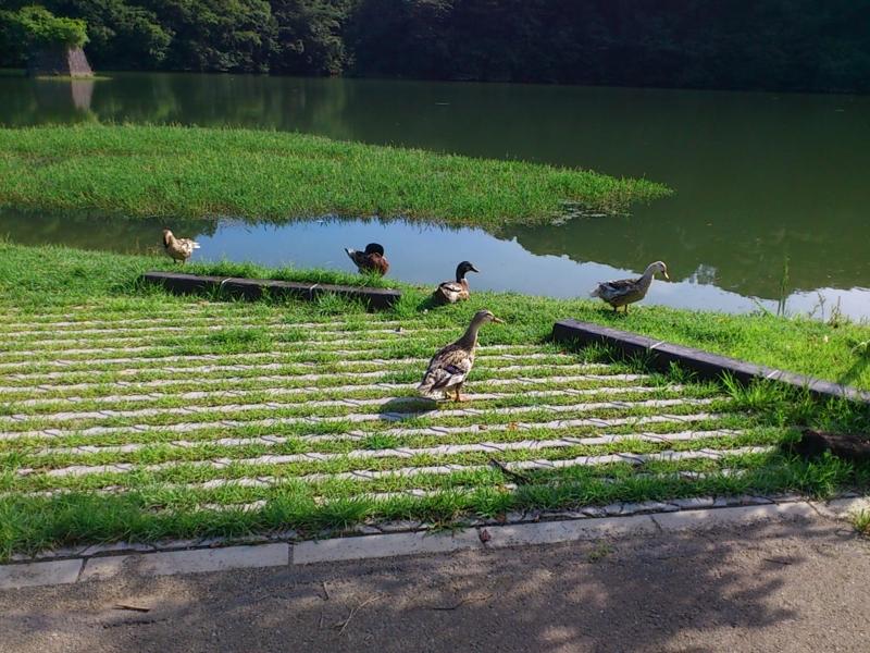 f:id:puchitenshi:20120719082729j:image