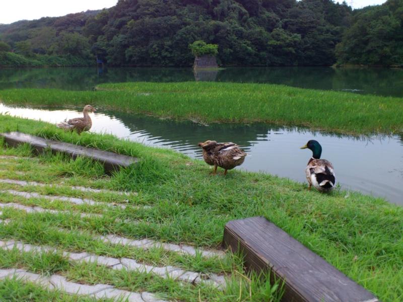 f:id:puchitenshi:20120727180800j:image