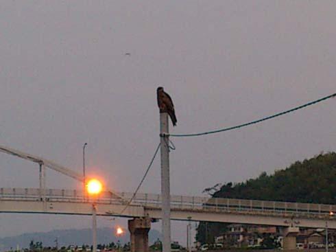f:id:puchitenshi:20120921095137j:image