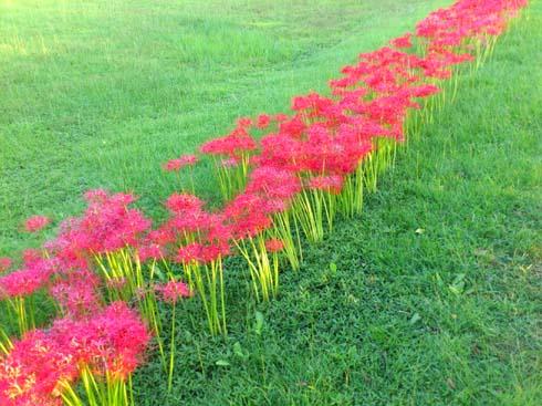 f:id:puchitenshi:20121002220133j:image
