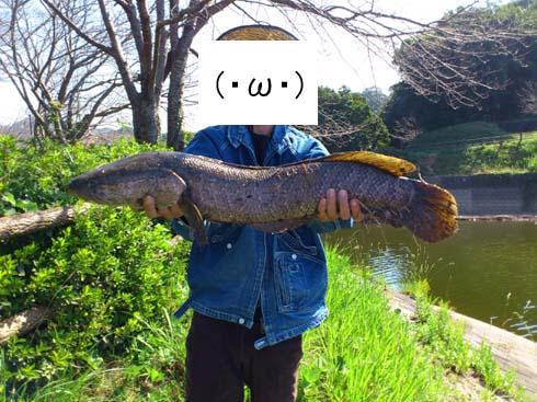 f:id:puchitenshi:20121010224533j:image
