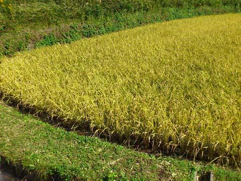 f:id:puchitenshi:20121019112851j:image