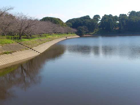 f:id:puchitenshi:20121024033334j:image