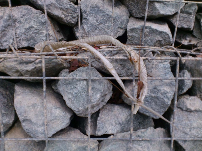 f:id:puchitenshi:20121103014414j:image