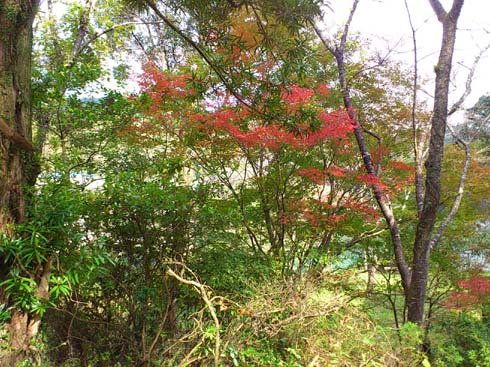 f:id:puchitenshi:20121104203606j:image