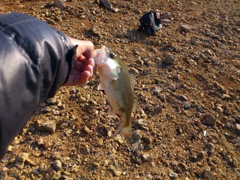 f:id:puchitenshi:20121105200351j:image