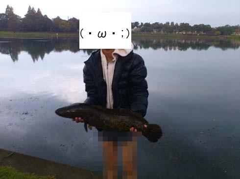 f:id:puchitenshi:20121107021628j:image