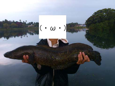 f:id:puchitenshi:20121107021649j:image