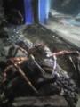 プライドの高そうな蟹