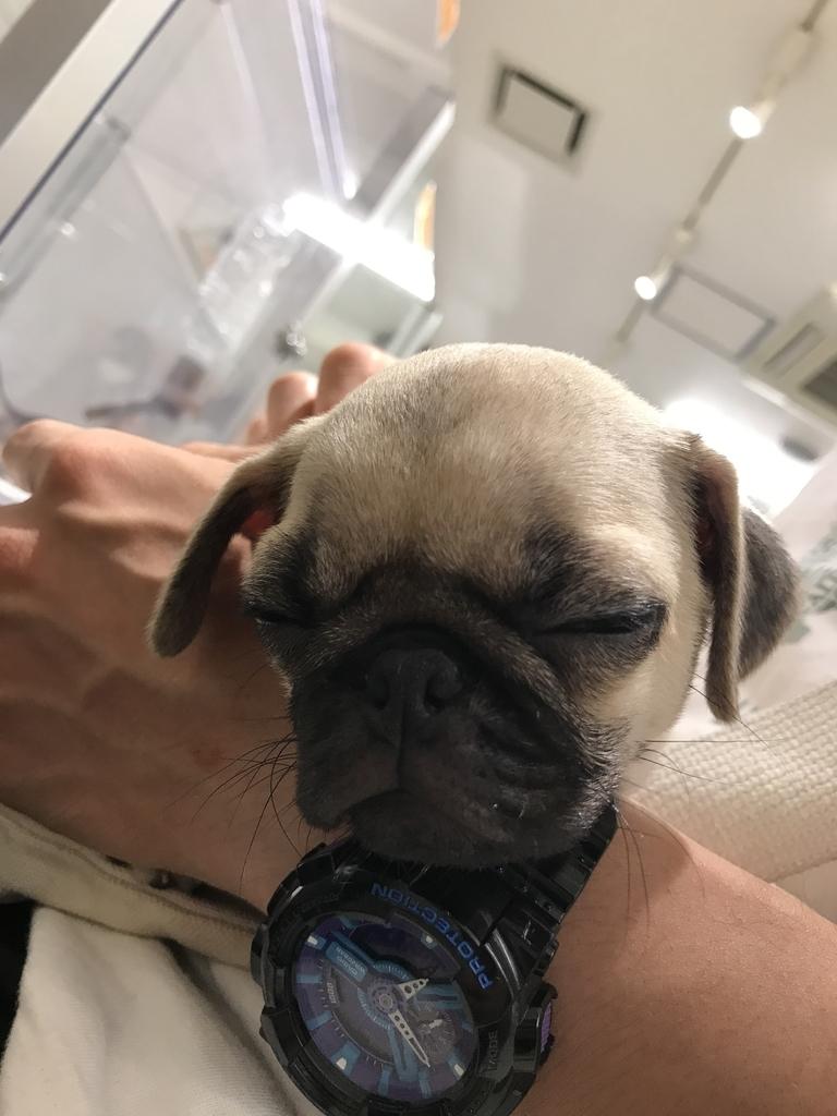 f:id:pug_money:20181128222026j:plain