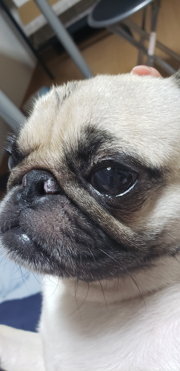 f:id:pug_money:20190807002333j:plain