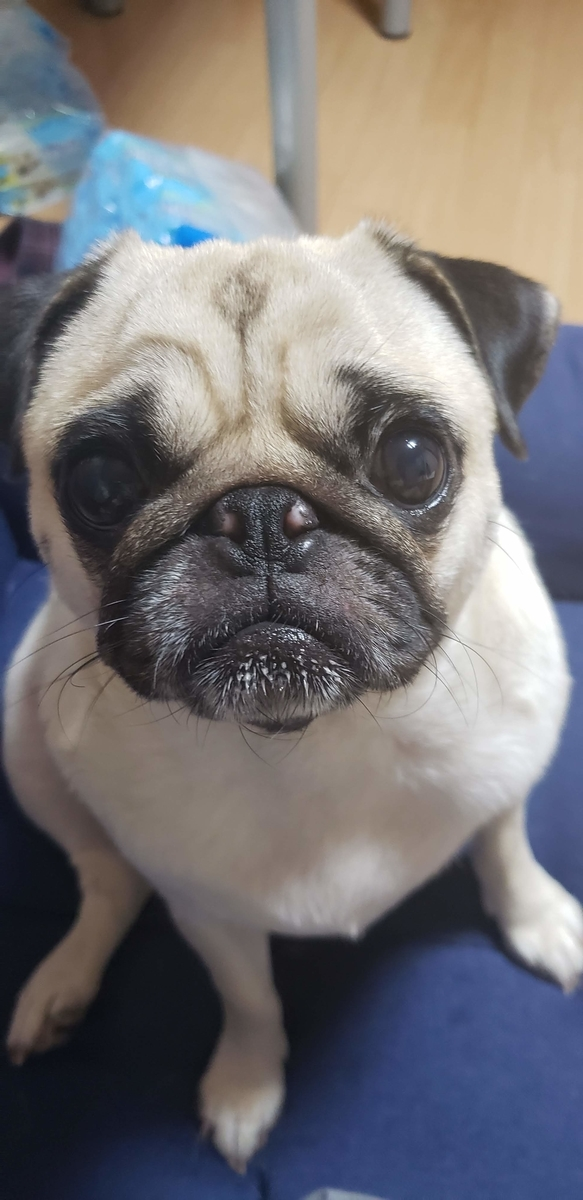 f:id:pug_money:20190808223329j:plain