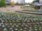 フラワーセンターの花の植え替え