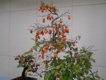 文化の日 柿