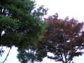家の周りの木