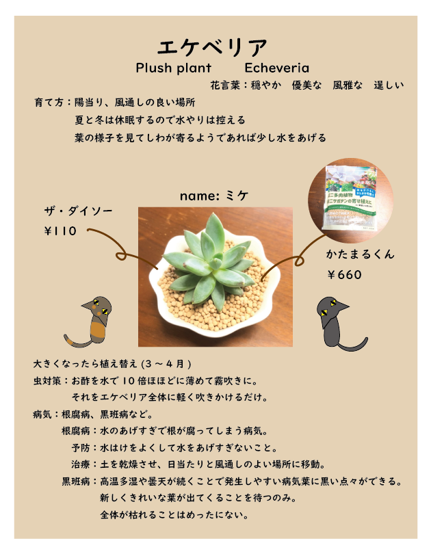 f:id:punimaru624:20210205215318p:plain
