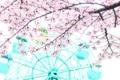 京都新聞写真コンテスト 春巡る