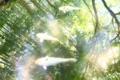 京都新聞写真コンテスト 新緑を泳ぐ