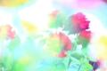 京都新聞写真コンテスト 愛の花