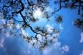 京都新聞写真コンテスト 青天の霹靂