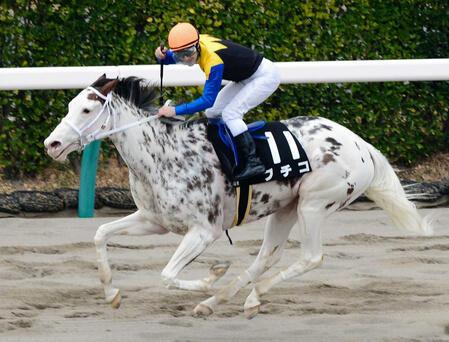競走馬ブチコ