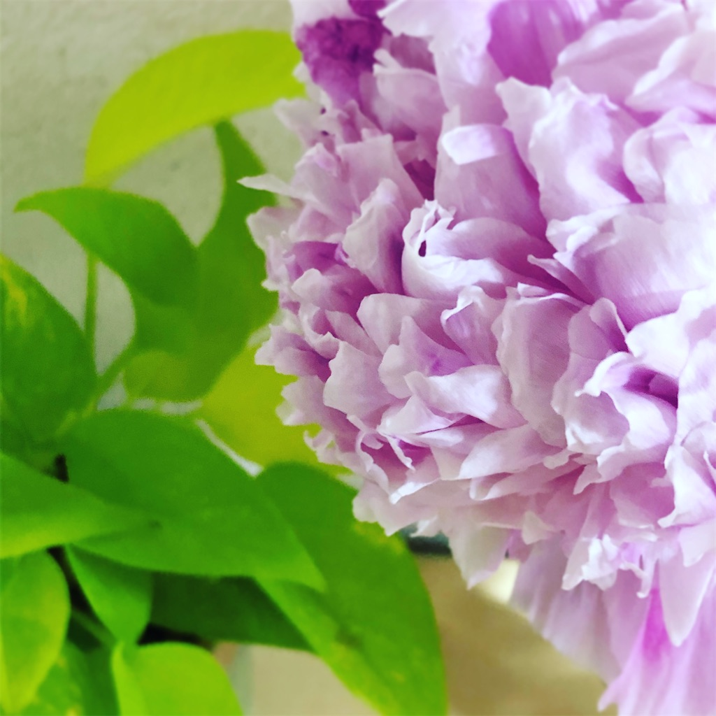 f:id:purplekuina246:20200529222012j:image