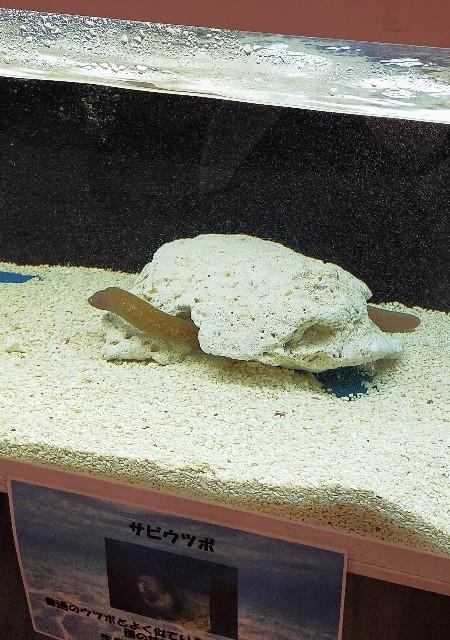 わくわく水族館の展示の楽しかったのサビウツボ
