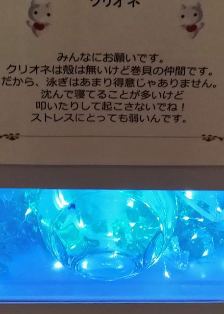 ゴールデンカムイのクリオネの水族館の注意書き