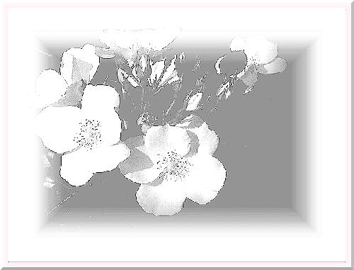 f:id:pypyhiyoko:20210314150241j:plain