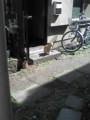 [猫]日向ぼっこする猫