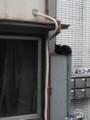 [猫]猫は、高い所が好き。