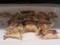 味の匠のプリプリ丸ごとエビ生餃子