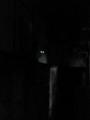 [猫]暗闇に光る眼