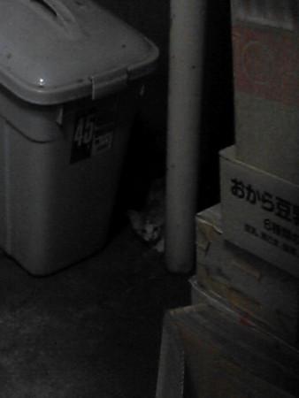 子猫が玄関を訪問。