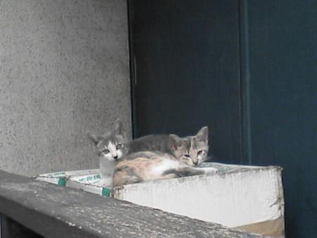 ベランダの子猫の兄弟