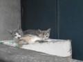[猫]ベランダの子猫の兄弟