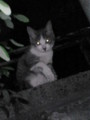 [猫]塀の上の子猫