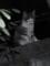 塀の上の子猫