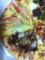 ドミノピザのクワトロアニバーサリーロブスターとずわい蟹のグラタン