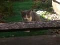[猫]この子猫のお気に入りの場所らしいです。にらんでます。