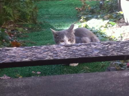 この子猫のお気に入りの場所らしいです。にらんでます。