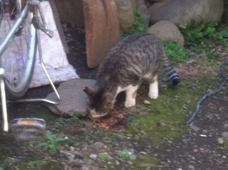 何かをこそげ取りながら、食べる子猫
