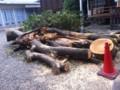 強風のため折れた、樹齢400年ほどのけやきの木