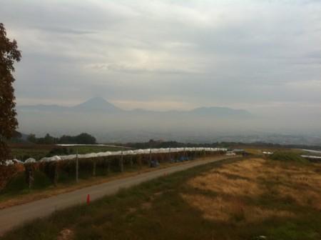 眺望台からの眺め(富士山)@サントリー登美の丘ワイナリー