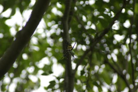 f:id:qayap:20120916110336j:image:w560
