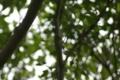 コガネグモ_20120916