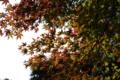 [豊浜][秋]貝がら公園_20121124_5