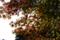 貝がら公園_20121124_5